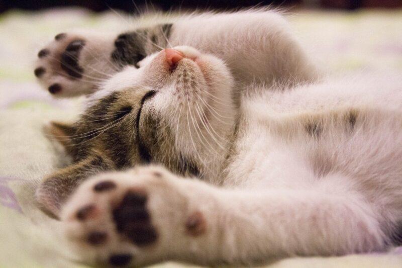 こたつが大好きな愛猫!安全に使用するための注意点