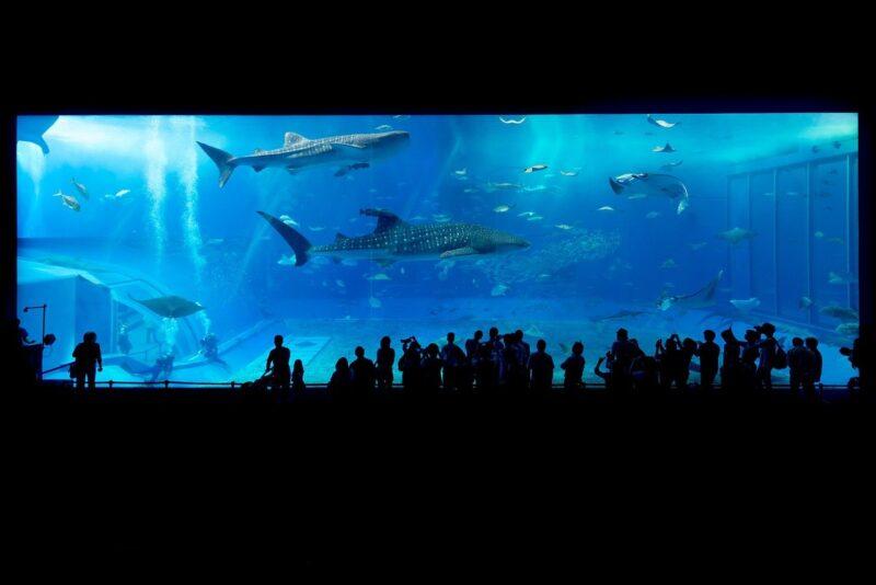 水族館と動物園はどっちがおすすめ?デートプランで人気なのは?