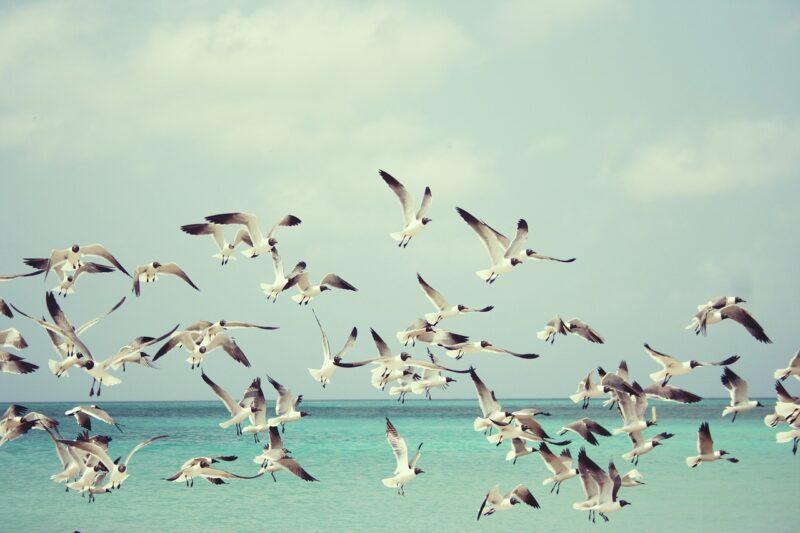 鳥のフンが服についたら幸運といわれる理由とは?